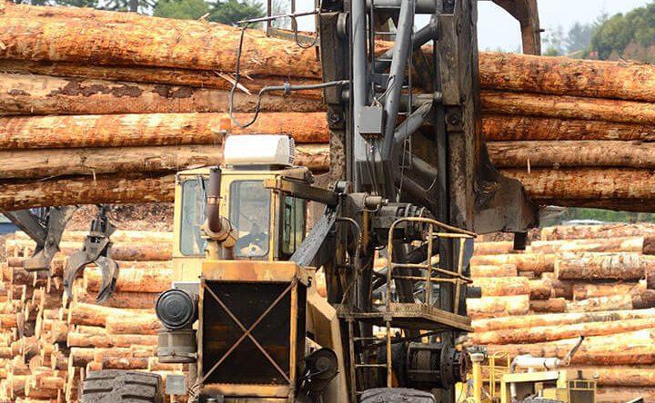 Timber Supply Dynamics
